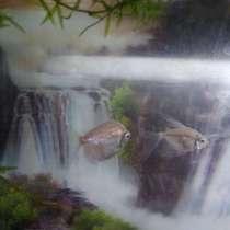 Рыбки аквариума, в Хабаровске
