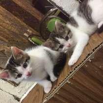 Котята в добрые руки, в Брянске