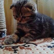 Предлагаем к продаже шотландские котята, в г.Рыбница