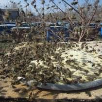 Соевая мука для весенней подкормки пчел, в г.Токмак
