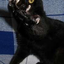 Кот ищет дом, в Москве