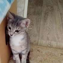 Котенок в добрые руки, в Самаре