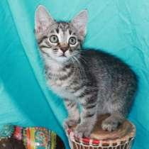 Замечательные полосатики, котятки-братишки 2 мес в дар, в Москве