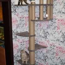 Продам комплекс лазялку для кошек, в Новосибирске