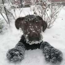Продам щенка, в г.Киев