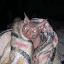 Котик на вязку, в Калуге