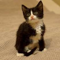 Котят 1.5 месяца, в Челябинске
