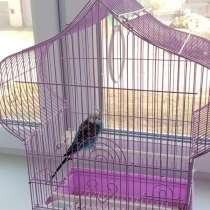 Волнистый попугай с клеткой, в Дзержинске