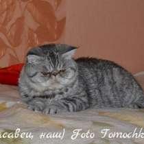 Вязка с экзотом, в Тольятти