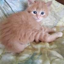 В добрые руки подарю котят 6 недель, в г.Единцы