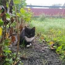 Отдам двух котят (2-3 месяца) вместе или по отдельности, в г.Брест