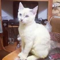 Котенок-мальчик в дар, в г.Могилёв