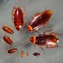 Уничтожение насекомых и грызунов, в г.Кривой Рог