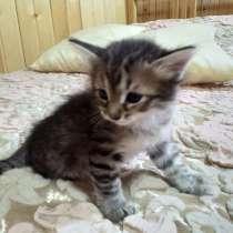Котёнок в добрые руки - девочка, 1,5 месяца, в Раменское