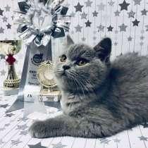 Британские котята, в Екатеринбурге