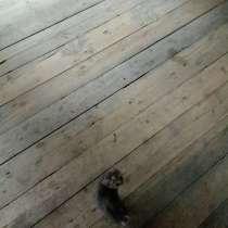Котята хорошие ловят мишей, в Иркутске