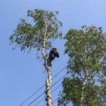 Спилить удалить дерево в Раменском, Раменском районе, в Раменское