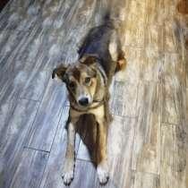Ищет дом замечательный пес Грей, в Москве