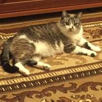 Отдам в хорошие руки умную сиерилизованную кошку, в Сыктывкаре