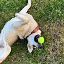 Веселая, ласковая, общительная молодая собака, в Санкт-Петербурге