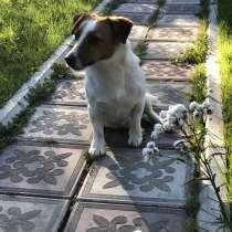 Погуляю с вашей собакой!, в г.Тбилиси