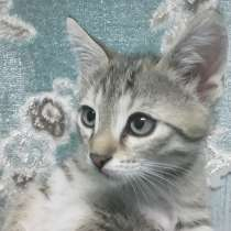 Отдадим котят в хорошую семью, в Астрахани