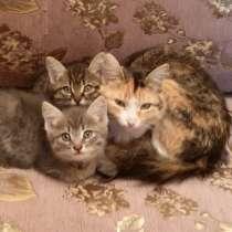 Отдам котят бесплатно, в г.Павлодар