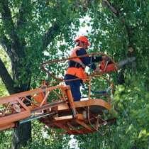 Вырубка деревьев в городе, в Новосибирске