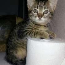 Котёнок в ПОДАРОК!!! Доставка, в г.Барановичи