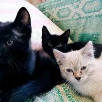 Ласковые котята ищут дом, в Кемерове