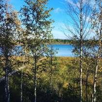 Лучший отдых и рыбалка в северных лесах, в Видном
