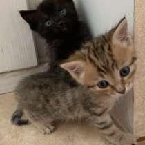 Котята, в Туле