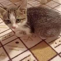 Котята в добрые руки, в Йошкар-Оле