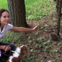 Няня для собачки (не большого размера) Выгул, передержка, в г.Пафос