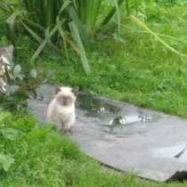 Котята, в Чигасове
