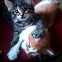 Отдам котят в добрые руки!, в Братске