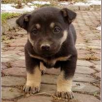 Срочно ищем хозяев для щенков!, в Москве