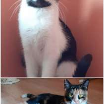 Домашние кошки, в г.Орша