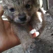Маленкая собачка, в г.Минск