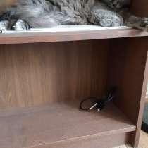Кошечка в добрые руки, в Ростове-на-Дону