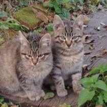 Котята в добрые руки, в Апрелевке