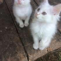 Отдам котят в добрые руки) три месяца) 2 мальчика 3 девочки, в г.Кобрин
