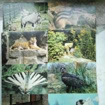 Открытки собак(Чехословакия), животных, птиц, в Рубцовске