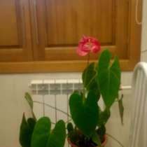 Продам цветок комнатный, в Братске