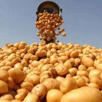Продам картофель оптом, в Екатеринбурге