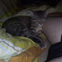 Котик, в Златоусте