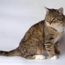 Мудрый кот Будда ждет встречи с близкими по духу людьми, в Москве