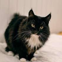 Кошка в дар, в Ижевске