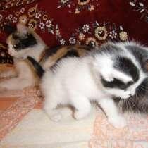 Отдам в ласковые руки котёнка, в Самаре