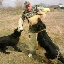 Дрессировка собак, в Гулькевичах
